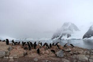 Adelie Penguin Collony, Antarctica