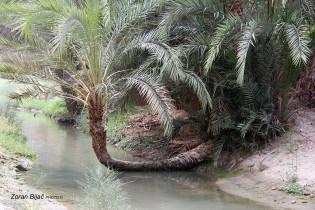 An Oasis Near Tozeur, Tunisia
