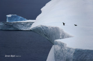 Oh, You Are So Brave, Please Yump For Me!, Antarctica