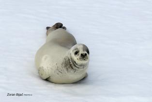 WTF ? , Antarctica