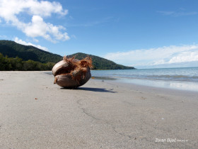 Beach Near  Daintree Rainforest, Queensland, Australia