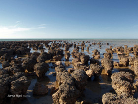 Stromatolites (Fossilized Remains - Ancient Records Of Life On Earth - Date From More Than 3.5 Billion Years Ago), Western Australia, Australia