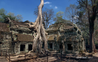 Eternal Struggle - Human Being Or Nature?, Ta Prohm Temple, Cambodia