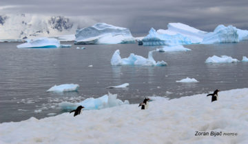 Leading Trio On The Tour Of Antarctica, Antarctica