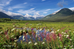 Summer Landscape Near Anchorage, Alaska, USA