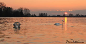 Sunset Over Swan Lake Soderica, Podravina, Croatia