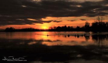 Sunset Over Swan Lake Soderica Near Koprivnica, Podravina, Croatia; Labudovi Na Šoderici Pred Zalazak Sunca, Podravina, Hrvatska