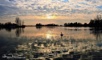 Sunset Over Swan Lake Soderica Near Koprivnica, Podravina, Croatia; Labudovi I Zalazak Sunca Na Jezeru Šoderica Pored Koprivnice, Podravina, Hrvatska