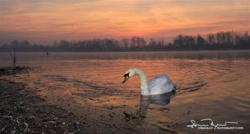 Morning Glory, Sunrise Over Swan Lake Soderica, Podravina, Croatia; Veličanstveno Jutro I Izlazak Sunca Na Jezeru Šoderica, Podravina, Hrvatska