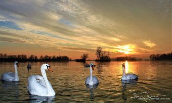 Sunset Over Swan Lake Soderica Near Koprivnica, Podravina, Croatia; Zalazak Sunca Na Labuđem Jezeru Šoderica Pored Koprivnice, Podravina, Hrvatska