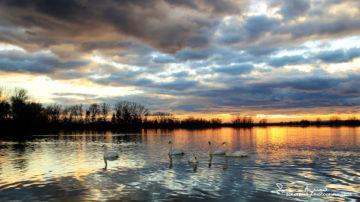 Sunset Over Swan Lake Soderica, Podravina, Croatia; Labudovi   I Zalazak Sunca Na Labuđem Jezeru Šoderica, Podravina, Hrvatska