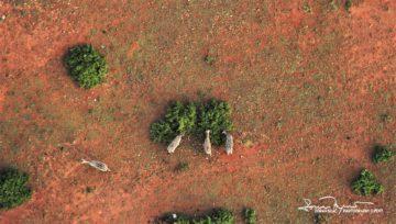 How Birds See, Masai Mara, Kenya