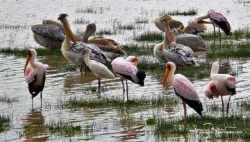 Not as Pretty as Flamingos, but Still Interesting, Lake Manyara, Tanzania