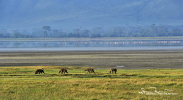 A Group of Hyenas Looking for a Free Meal, with Flamingos in the Background, Ngorongoro, Tanzania