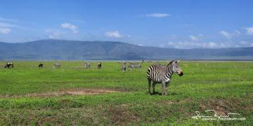 Always Aware of the Possible Danger, Ngorongoro, Tanzania