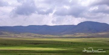 "Animals ""Trapped"" in the World's Biggest Caldera, Ngorongoro, Tanzania"