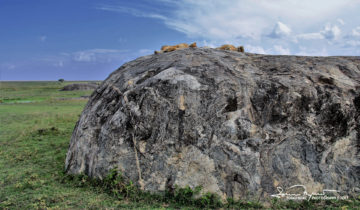 Deserved Vacation, Serengeti, Tanzania