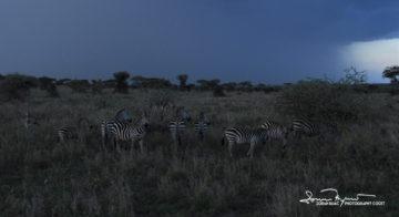 Before the Storm, Serengeti, Tanzania