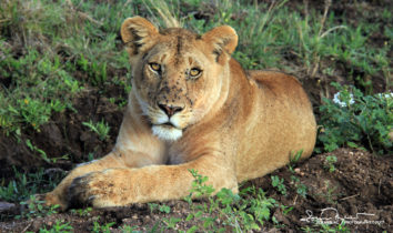 Eye to Eye, Serengeti, Tanzania