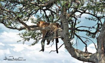 Please, Don't Dsturb! Masai Mara, Kenya